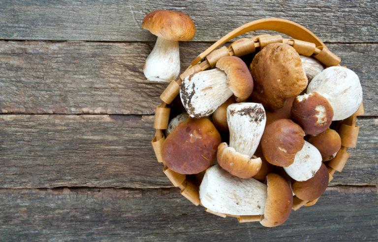 vendita di funghi- funghi-funghi freschi