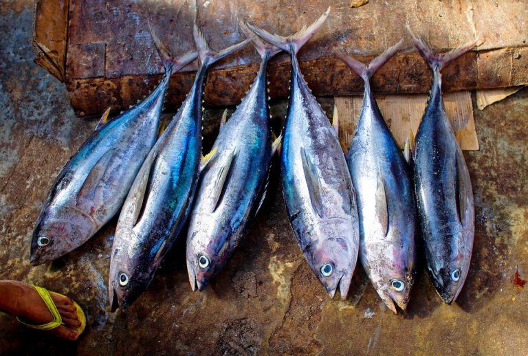 tonno-pesci