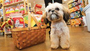 animali negozi