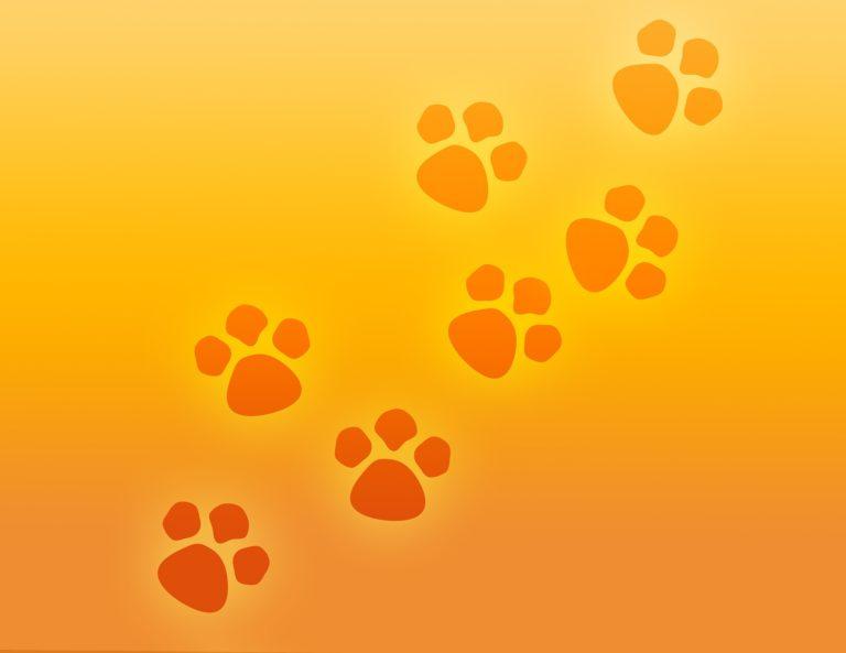 prestazioni veterinarie